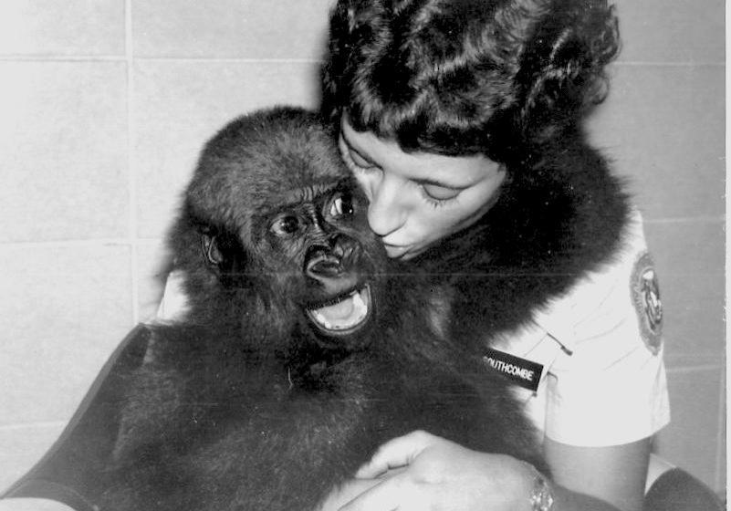 Ann Southcombe, Gorilla Girl